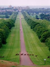 Windsor Great Park-Perfect Venue for Party